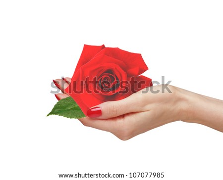 Red rose in woman hand isolated on white background