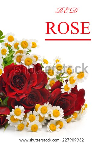 Red rose isolated and camomiles on white background - stock photo