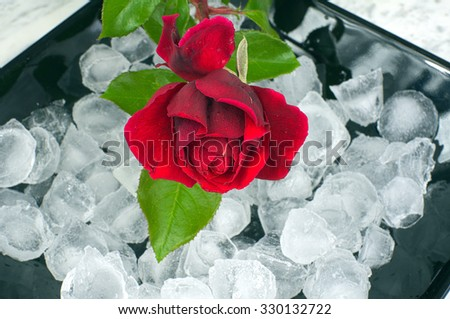 Red rose on a black plate - stock photo