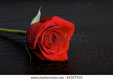 Red rose on a dark brown textured leather background - stock photo