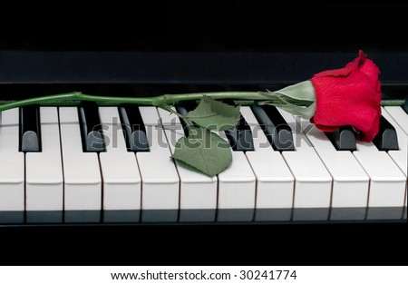 red rose on a piano - stock photo