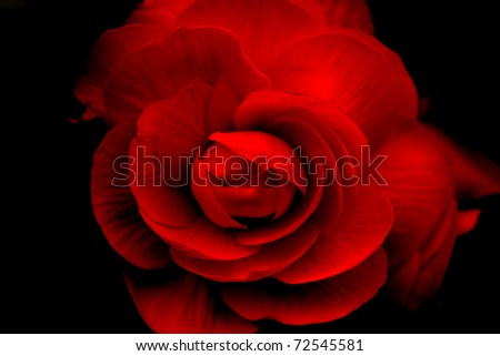 Red rose on black - stock photo