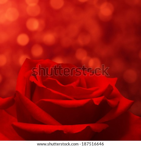 Red rose on bokeh background - stock photo