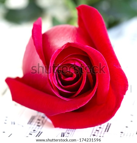 Red rose on musical score - focus on the rose - stock photo