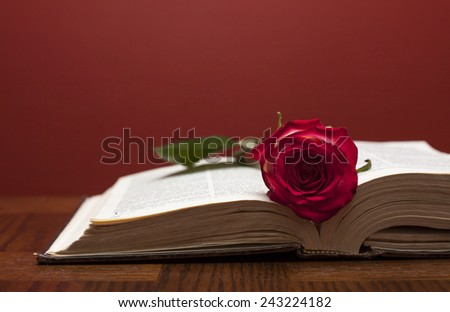 Red rose on the book on table  - stock photo