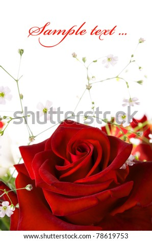 Red rose on the white background - stock photo
