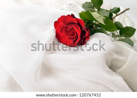 red rose on white silk isolated
