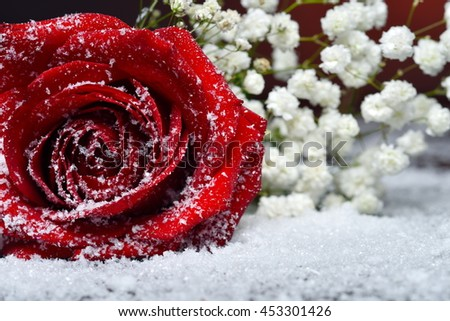 Red rose over snow - stock photo