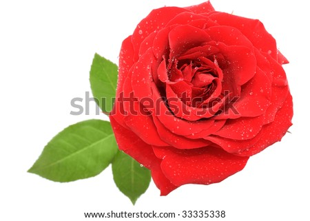 Red rose over white background - top view - stock photo