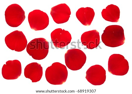 Red rose petal collection isolated on white background