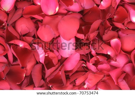 red rose petals as a background - stock photo