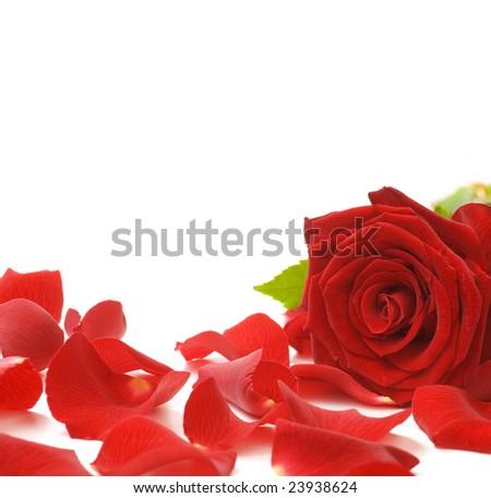 Red Rose & Petals Border - stock photo