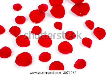 red rose petals in white background, love concept