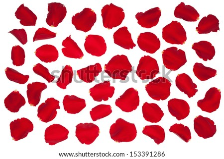 Red rose petals, isolated on the white background. - stock photo