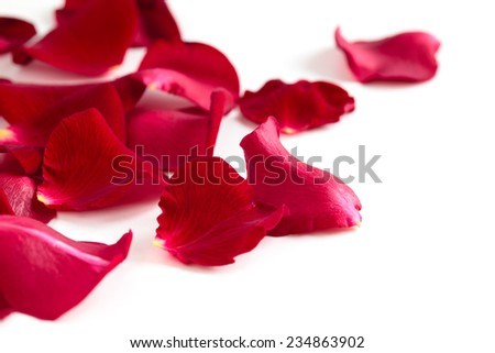 Red rose petals isolated on white background.