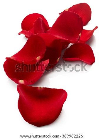Red rose petals isolated on white background - stock photo