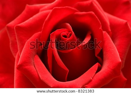Red rose with heart symbol from petal in center. - stock photo