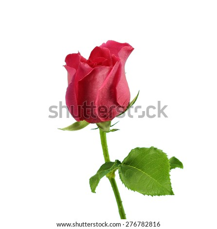 Red rose with isolation background