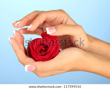 Red rose with woman's hands on blue background - stock photo