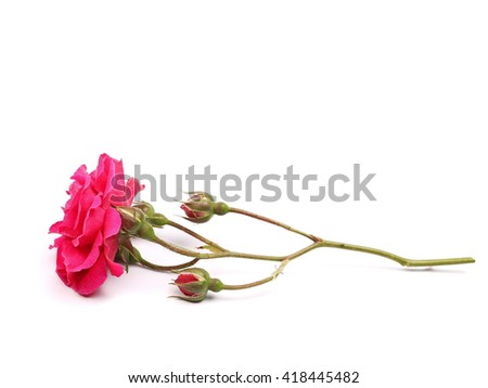 Red roses and buds isolated on white background - stock photo