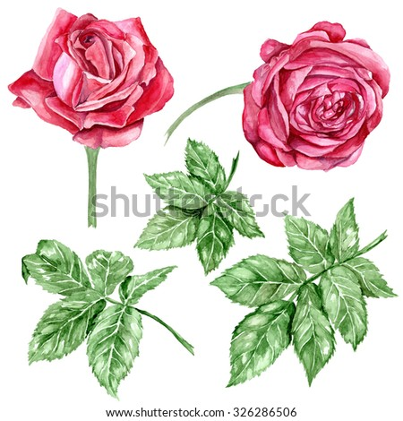 Red roses and leaves, isolated on white background. Watercolor illustration - stock photo