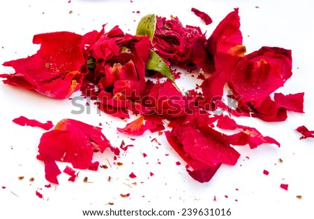 Red roses and petals wither scattered on a white background. - stock photo