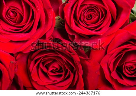 Red roses close up showing the detail in the petals - stock photo