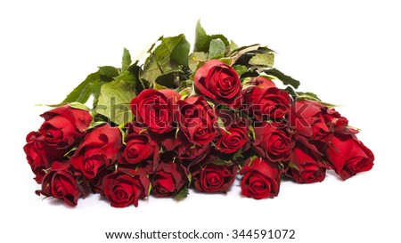 red roses isolated over a white background