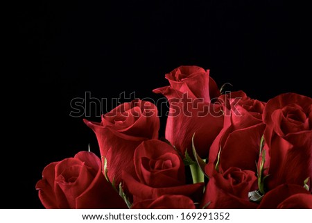 Red roses on black background - stock photo
