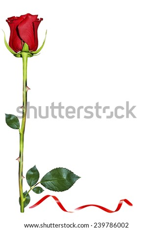 Red roses on white background - stock photo