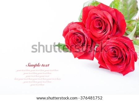 Red roses with water droplets on a white background with sample text, selective focus