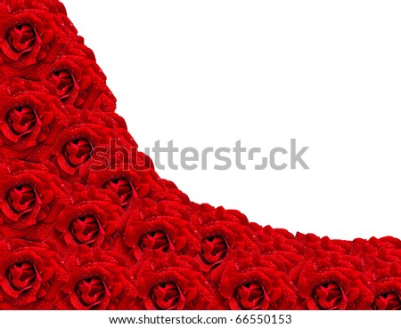 red roses with water drops - stock photo
