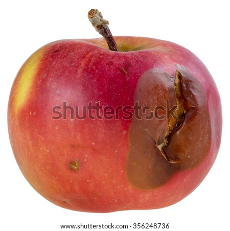 Red rotten apple on white background - stock photo