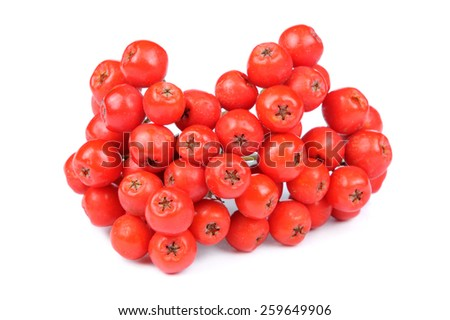 Red Rowan (Mountain-Ash) Berries Isolated on White Background - stock photo