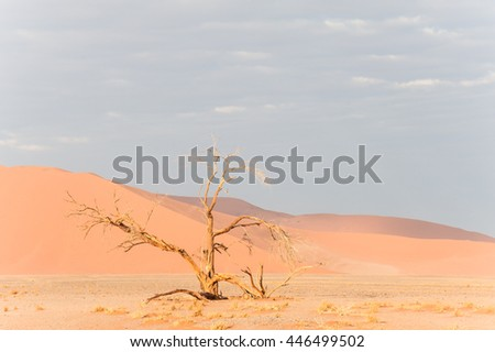 Red sand dunes and scorched dead tree shortly after sunrise in  Namibia - stock photo