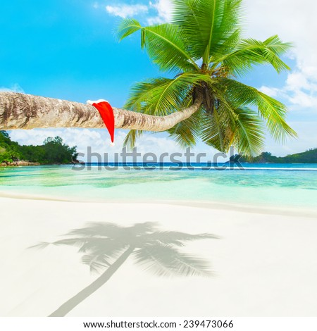 Red Santa hat on palm tree at tropical ocean beach. Holiday concept for New Years or Christmas Cards.  - stock photo