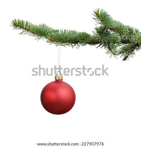 red satin glass ball hanging on christmas branch, isolated on white