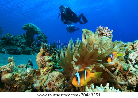 Red Sea Anemonefish and pair of Scuba Divers - stock photo