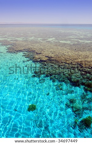 "Red Sea, Aqaba gulf, Egypt. Coral reef ""Napoleon""."