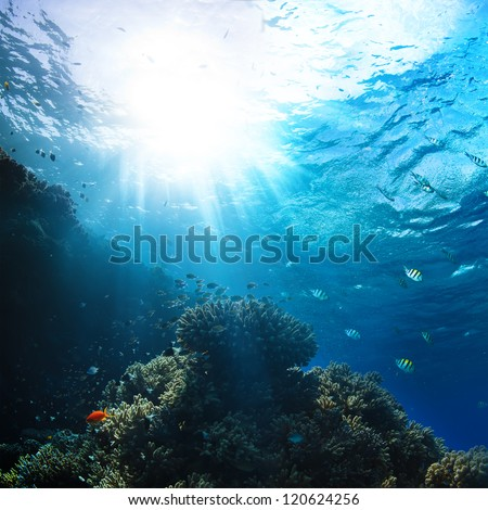 red sea underwater coral reef with fishes and sunrays at the surface - stock photo