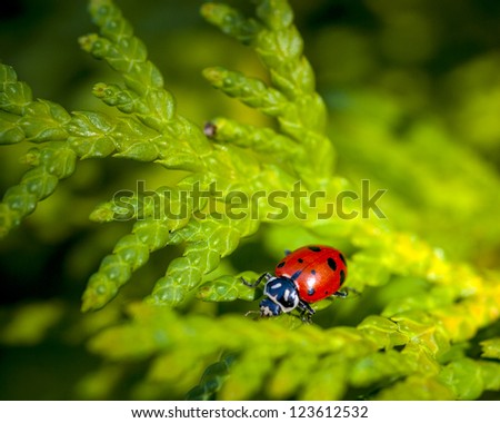 Red shelled Ladybug in a tree - stock photo