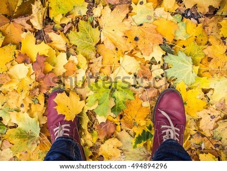 Red shoes on a background of yellow autumn leaves