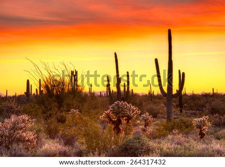 Red sky over Sonoran Desert, at sunset. - stock photo