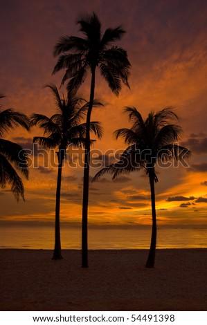 Red Sky Palms - stock photo