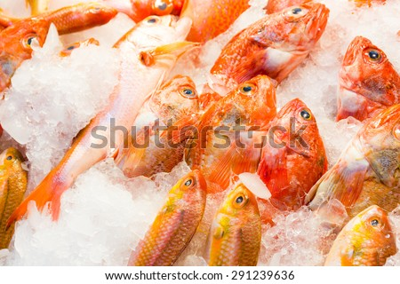 Red snapper fish in wet market - stock photo