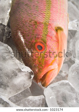 red snapper on ice - stock photo