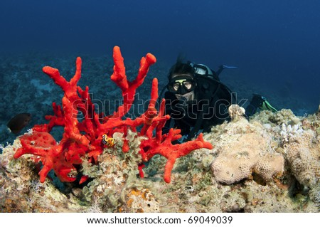 Red sponge coral and scuba diver - stock photo