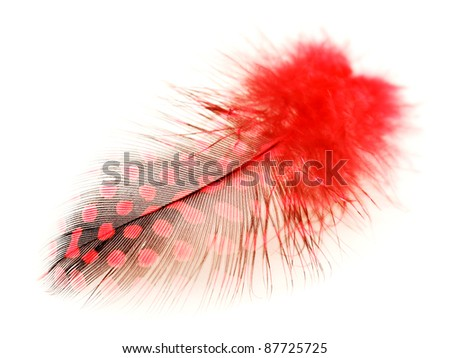 Red spotted feather on white background
