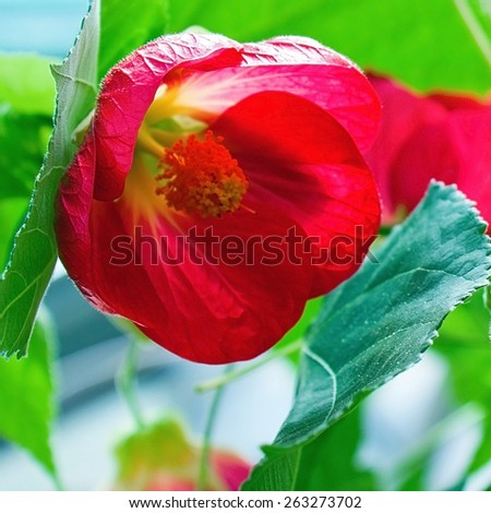 Red spring flowers - stock photo