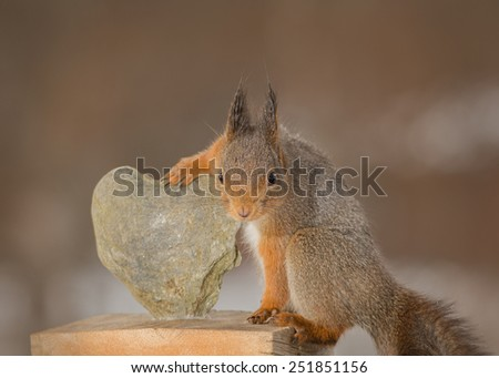 red squirrel holding a heart of stone